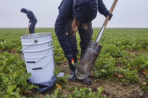 Provtagning i jord. Doktoranden Emma Fältström skrapar av en spade.